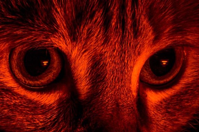 The Eyes-4